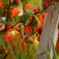 В саду у бабули :: sorovey Sol