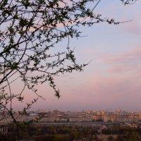 Под розово-голубым небом :: Елена Palenavi