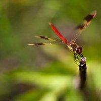 dragonfly :: Антон Лихач