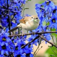 Птичка с гусеничкой . :: Hаталья Беклова