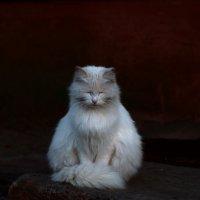 Медитация :: Екатерина Исаенко