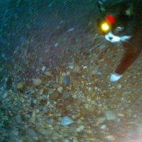 Кот-полуночник, с фонариком :) :: Милла Корн