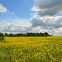 Желтое поле :: Милешкин Владимир Алексеевич