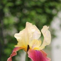 Цветочный хоровод-342. :: Руслан Грицунь
