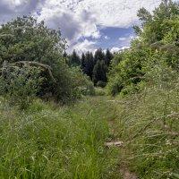 тропинка в лес :: gribushko грибушко Николай