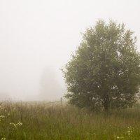 С туманом :: Александр