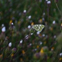 Butterfly :: Анна Каспер