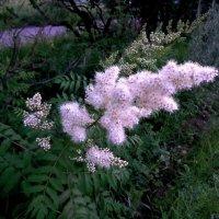 Цветы у дорог :: Милла Корн