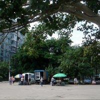 Мой дом под сенью деревьев :: Нина Корешкова