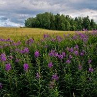 Летний пейзаж :: Андрей Куприянов