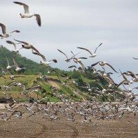 чайки :: Ирина Пантелеева