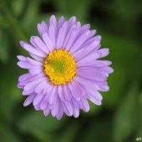 Цветочный хоровод-348. :: Руслан Грицунь