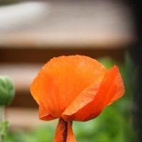 Цветочный хоровод-353. :: Руслан Грицунь