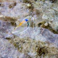 Красное море :: Александр Туренко