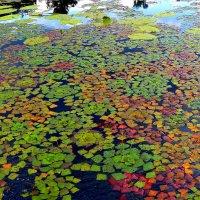 разноцветная водная мозаика :: Александр Прокудин