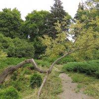 Ботанический сад :: Jana Sheremet