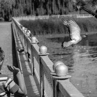 мальчик и голуби :: Валерий Чернов