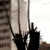 Такое дерево... это город... :: Валерия  Полещикова