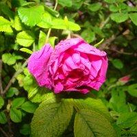 Цветочный хоровод-360. :: Руслан Грицунь