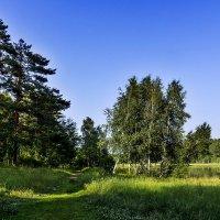 Тропинка для прогулок :: Анатолий Иргл
