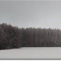 Белым снегом... :: Роман Макаров