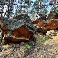 И на камнях растут деревья :: Sergey Kuznetsov