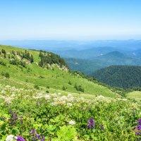 Альпийские луга (Малые Бамбаки) :: Геннадий Оробей