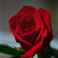 королева цветов) :: ирэн