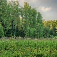 В лесной тиши... :: марк