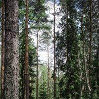 лесные похождения) :: Вячеслав Дубиковский