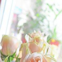 Розы... :: Анастасия Nikonова