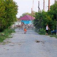 Лето в деревне :: Любовь Бутакова