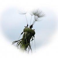 Одуванчик, отцветая, жизнь свою стократ умножил. :: Валентина ツ ღ✿ღ