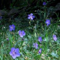 цветы в горах :: оленька вяткина