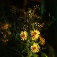 Старый термос, арбуз и вечернее солнце :: Ирина Сивовол