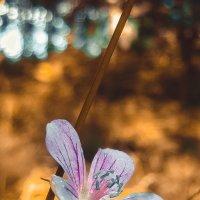 Природа :: Дмитрий Крестоварт