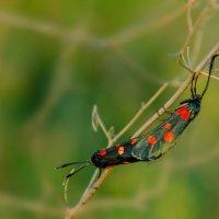 Бабочки :: Александр