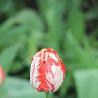 Цветочный хоровод-369. :: Руслан Грицунь