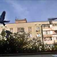Полетели!!!.. :: Нина Корешкова