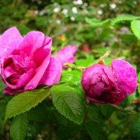 Цветочный хоровод-375. :: Руслан Грицунь