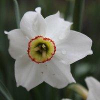Цветочный хоровод-372. :: Руслан Грицунь