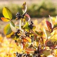 Осенние ягоды. :: Андрей Беспалов