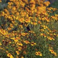 Полевые цветы :: Valerii Ivanov