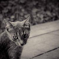 кошка :: Ирина Крюкова