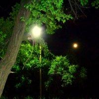 Фонарь для луны :: Милла Корн