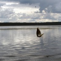 Рыбка ) :: Ирина Румянцева