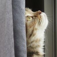 Охота на муху :: Наталья Нарсеева