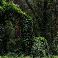 лесной хмель :: Natali-C C