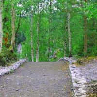 Дорожка средь карельских лесов :: Владимир Ладис