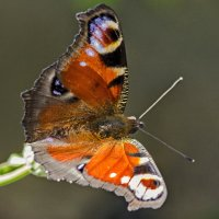 Бабочки летают! Бабочки!!! :: Ильдус Хамидулин